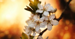 12920-tree-flower-sun-800w-tn