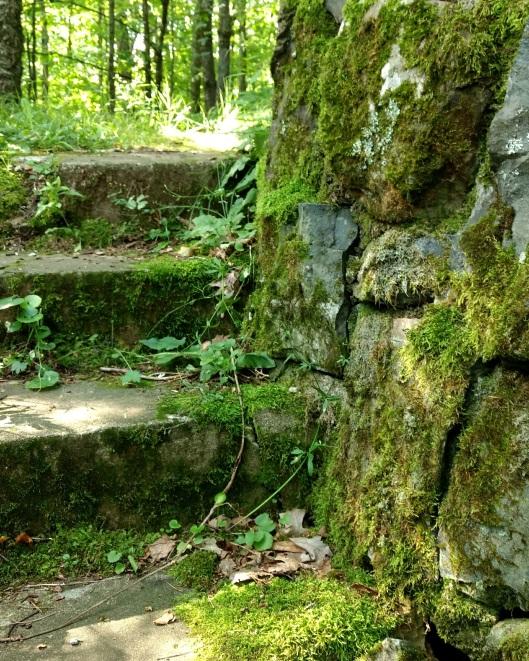 Mossy steps